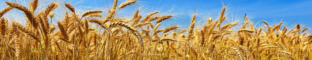 Personnalisez nos objets pub en paille de blé à vos couleurs